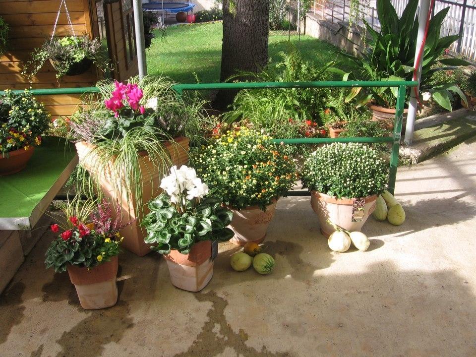 Vrtnarstvo Moretini, vrtni center, Koper gallery photo no.3