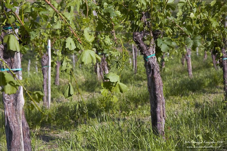 Izletniška kmetija Baredi, Izola gallery photo no.4