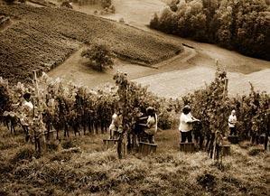 Kmetija Šumenjak, Jakobski dol, Štajerska gallery photo no.1