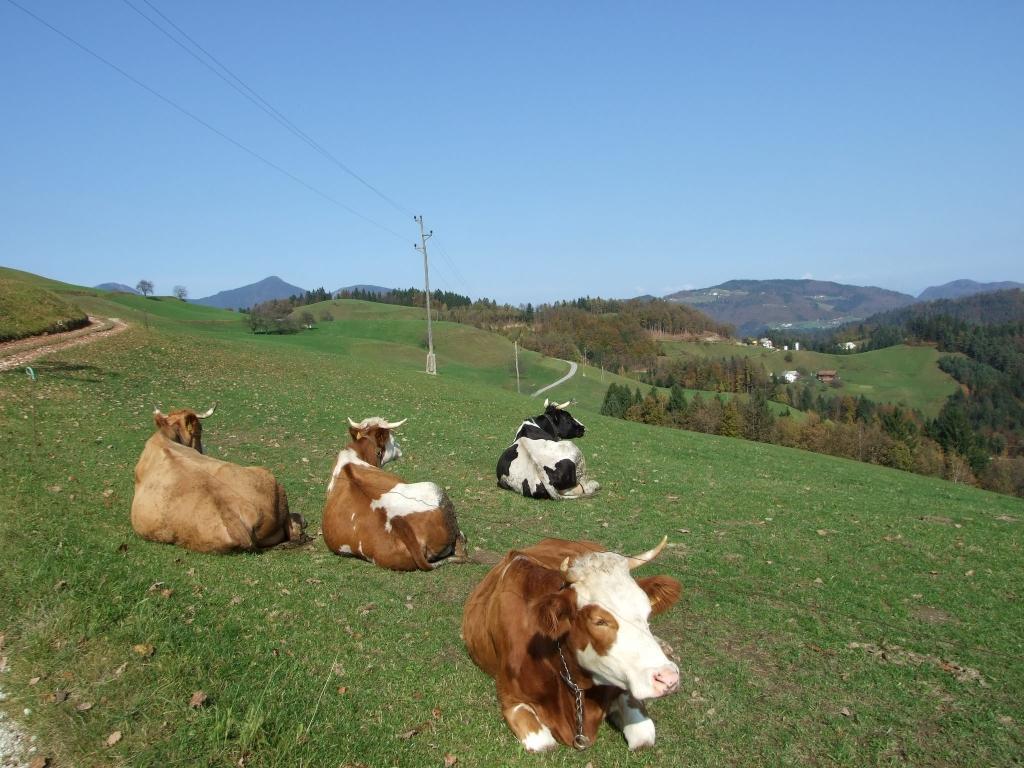 Turistična kmetija, Tourist farm, Škofja Loka gallery photo no.17