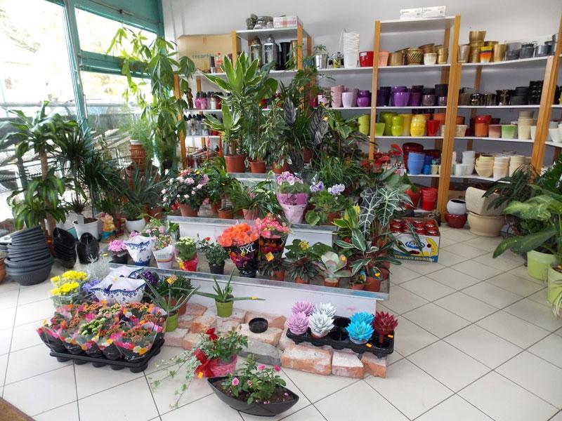 Cvetje in steklo, Apartmaji na otoku Krk, angus govedo, izdelki iz konoplje, Kirn gallery photo no.4