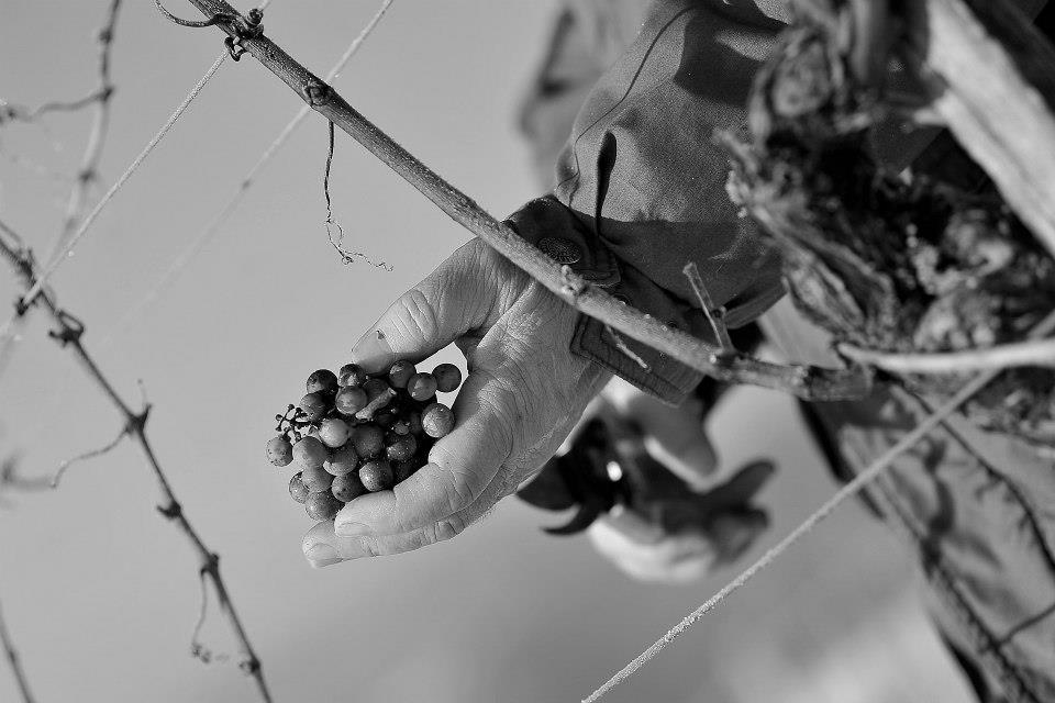 Sagmeister - Hiša pesmi in vina gallery photo no.14