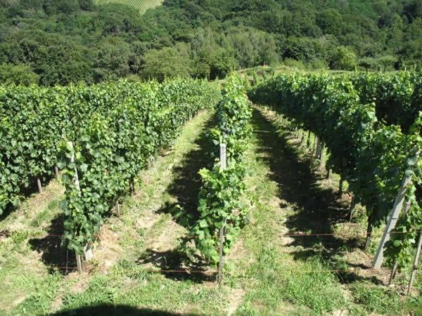 Turistična kmetija Dervarič, Pomurje gallery photo no.7