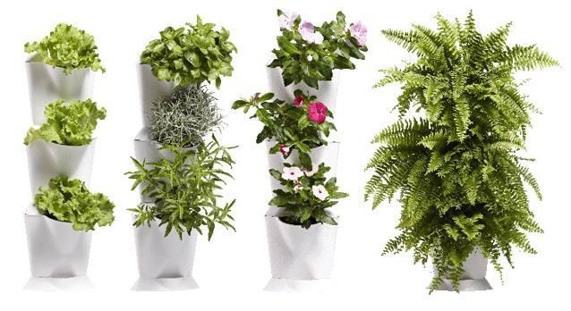 Superthrive, Agrogel, bio gnojila, svetila za rastlinjake, oprema za vzgojo rastlin - Budseason gallery photo no.4