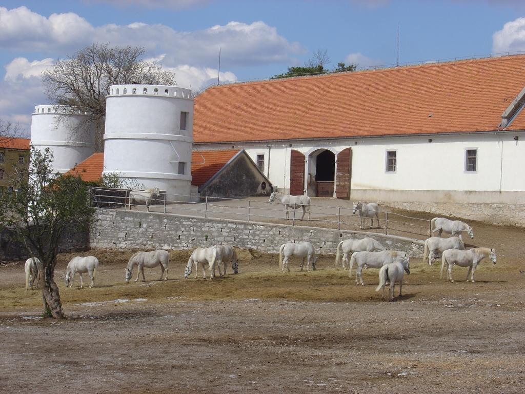 Sobe Ambrožič, turistična kmetija, gostilna, rooms, Škocjanske jame gallery photo no.10