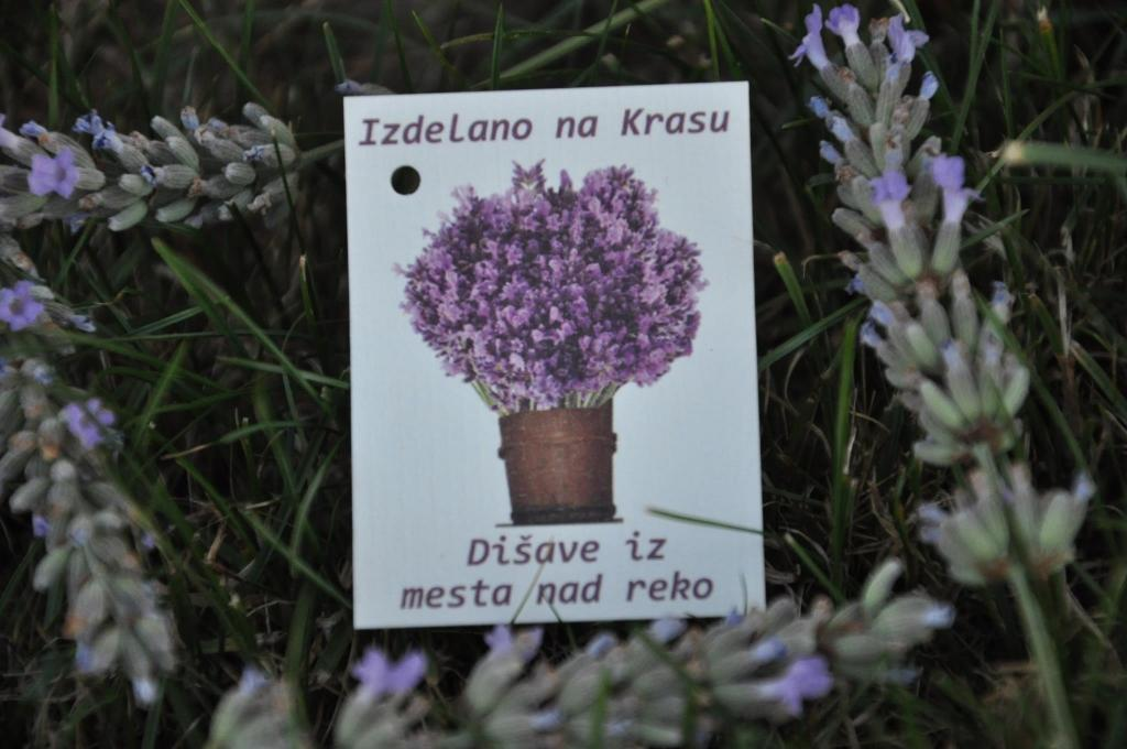Izdelki iz sivke Sivček, Divača gallery photo no.1