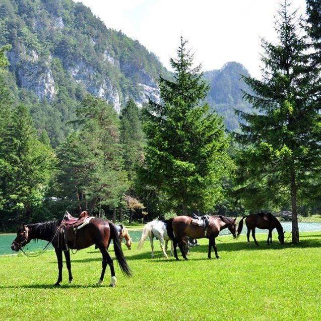 Konjeniški klub Lesce - Bled gallery photo no.3