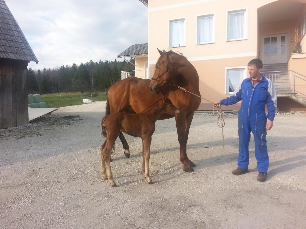 Kmetija Knavs, Bloke gallery photo no.10