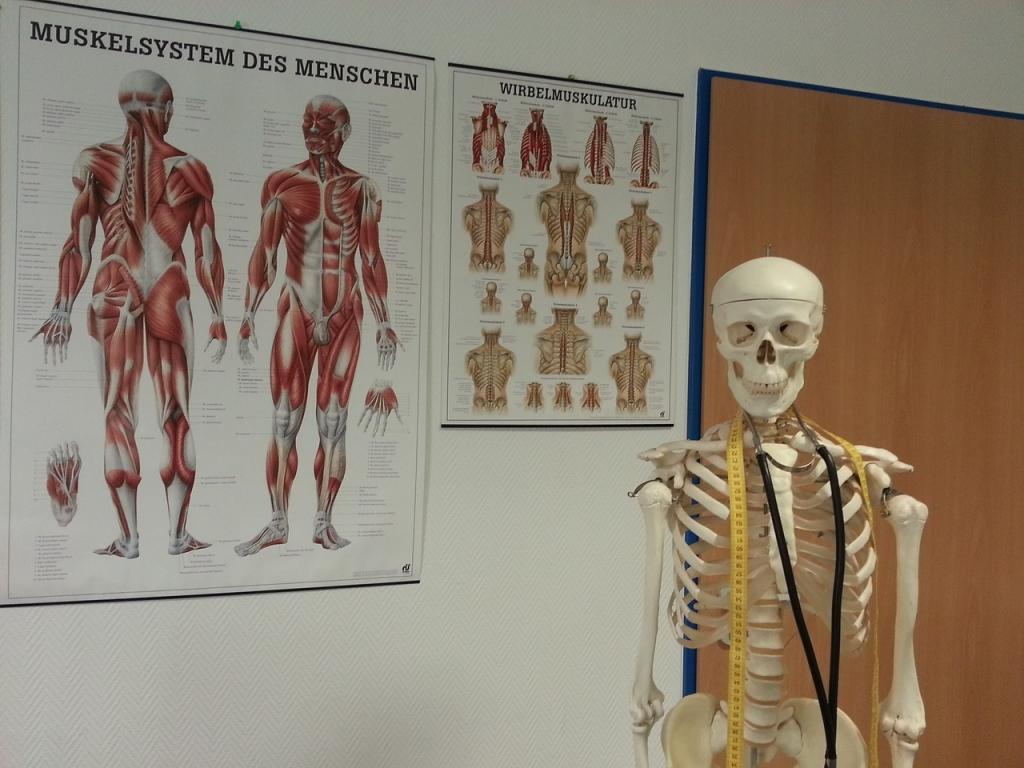 Ortopedija in njene zmožnosti - product image