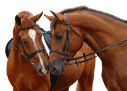 Ambulanta za konje - product image