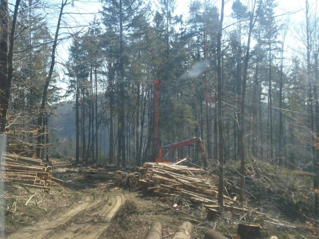 Urejanje gozda - product image