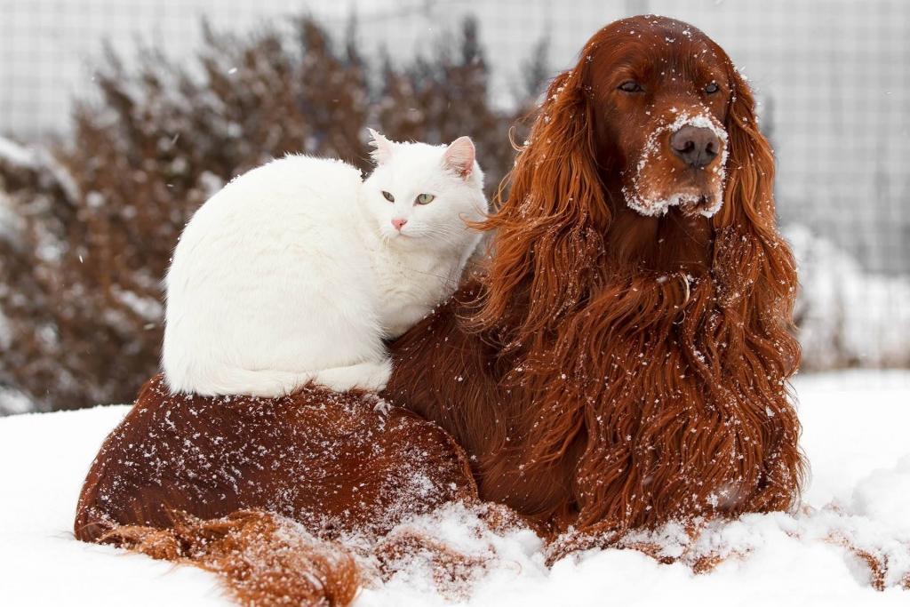 Živali pozimi - product image