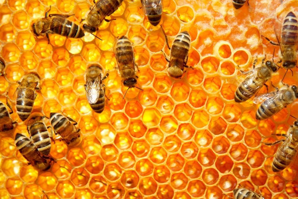Izleti za čebelarje - product image