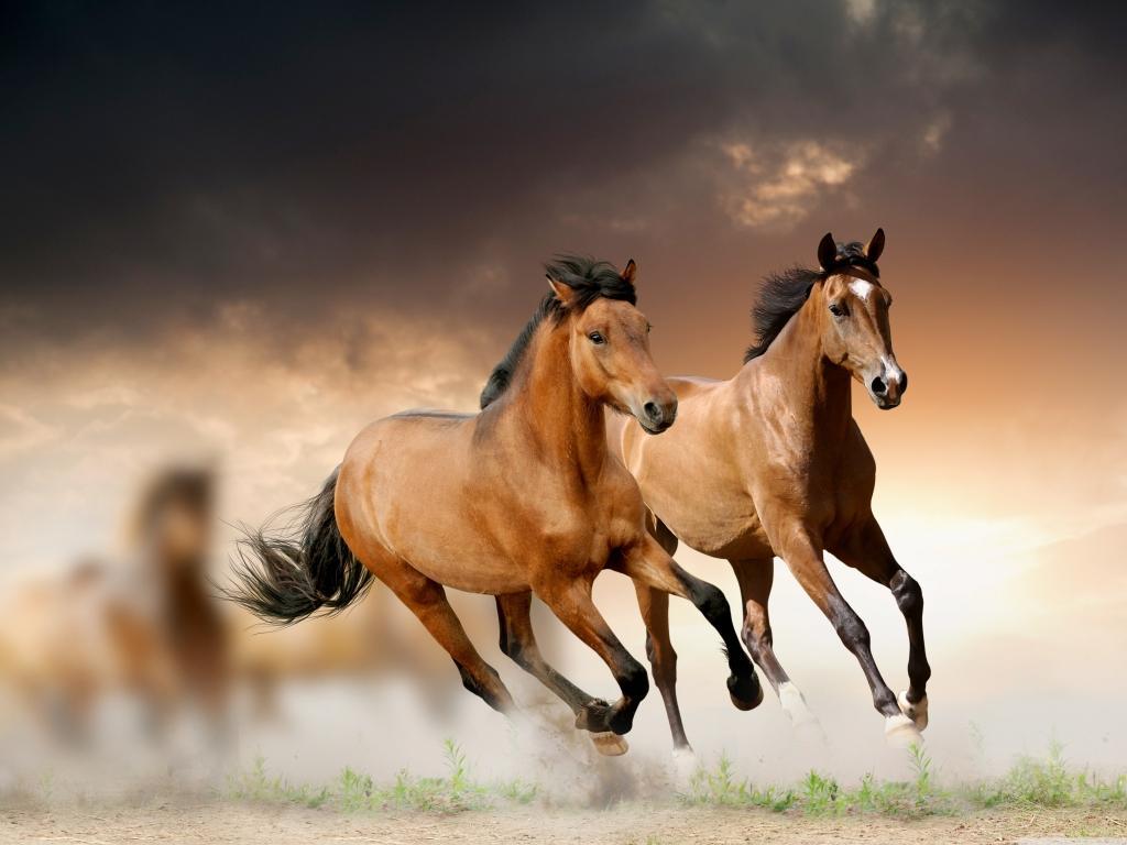 Izleti za konjenike - product image