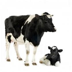 Velike rejne živali - product image