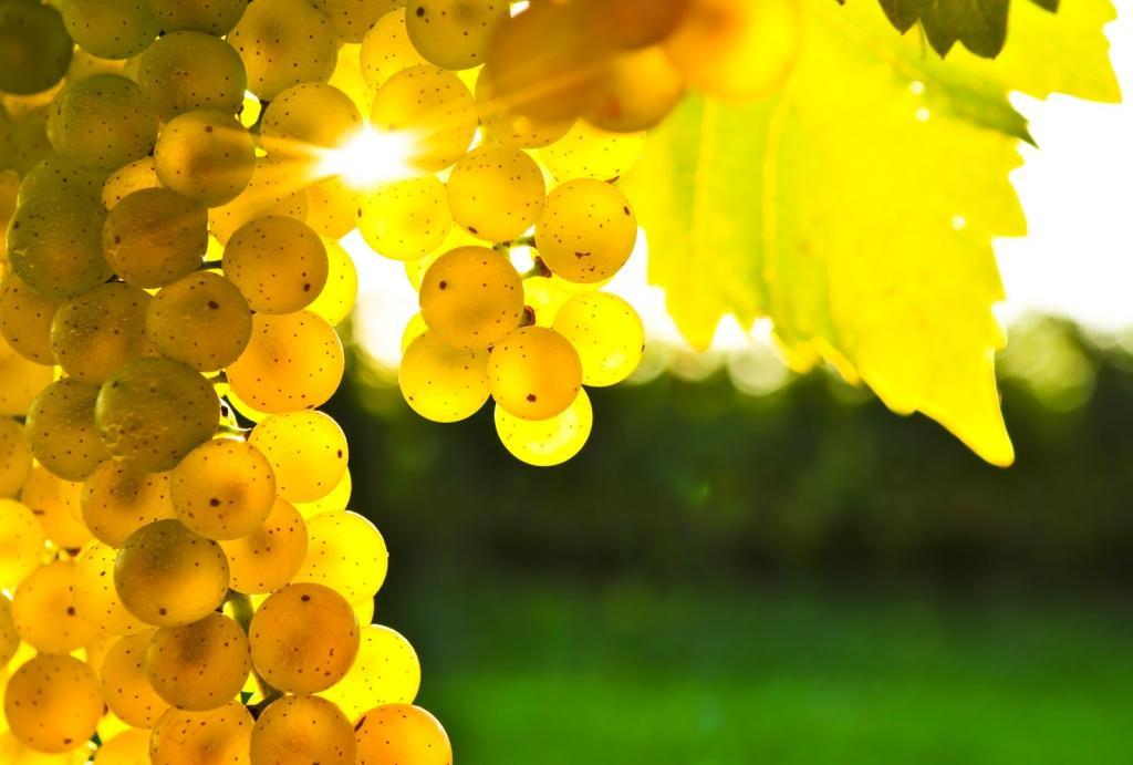 Chardonnay - product image