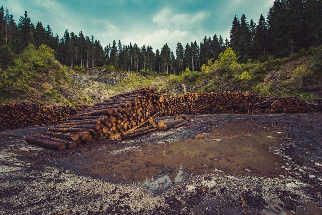 Posek gozda - product image