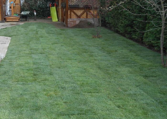 Polaganje travne ruše in strojna setev trave - product image