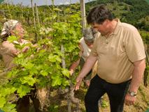 Vinogradništvo - product image