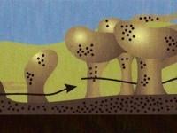 Kemično in biološko čiščenje ter dezinfekcija - product image