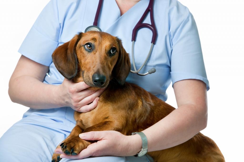 Obisk pri veterinarju - označevanje, cepljenje in letni pregledi - product image