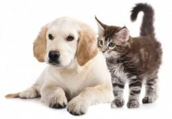 Ambulanta za male živali - product image