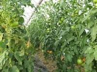 Ekološka pridelava na kmetiji - product image