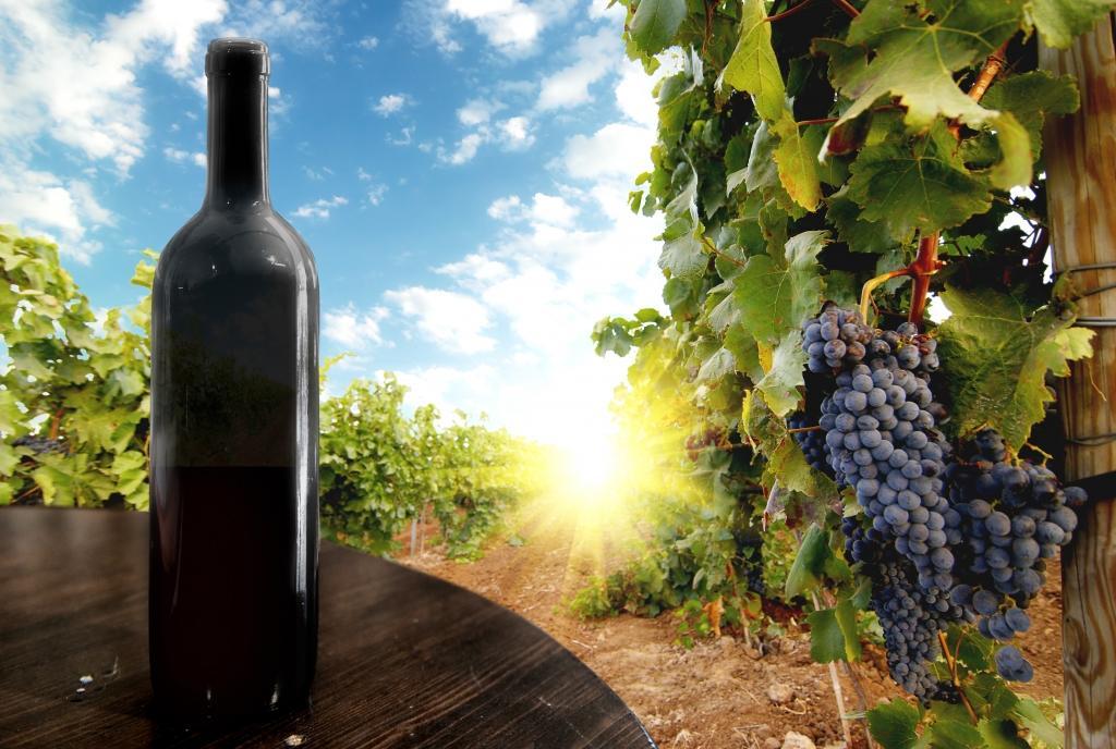 Deželica sonca in grozdja - product image