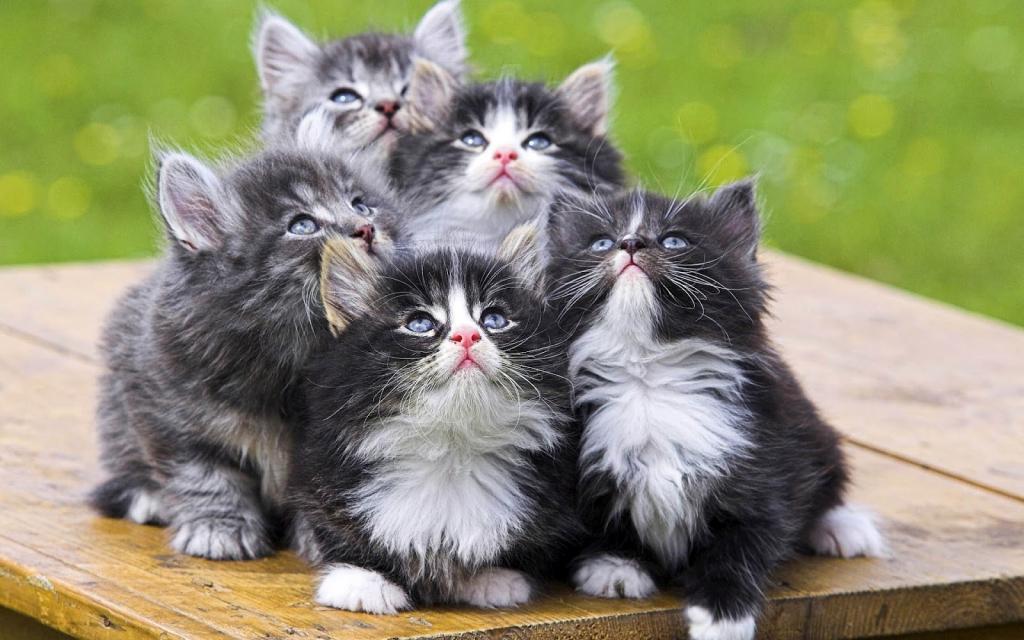 Obnašanje mačk - product image