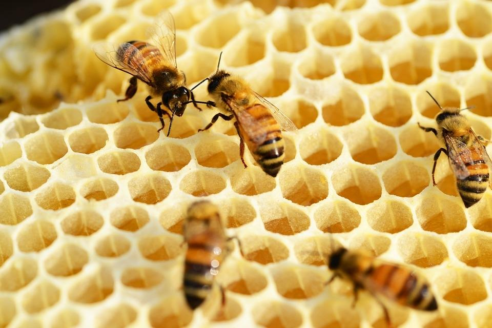 Čebelarstvo - product image