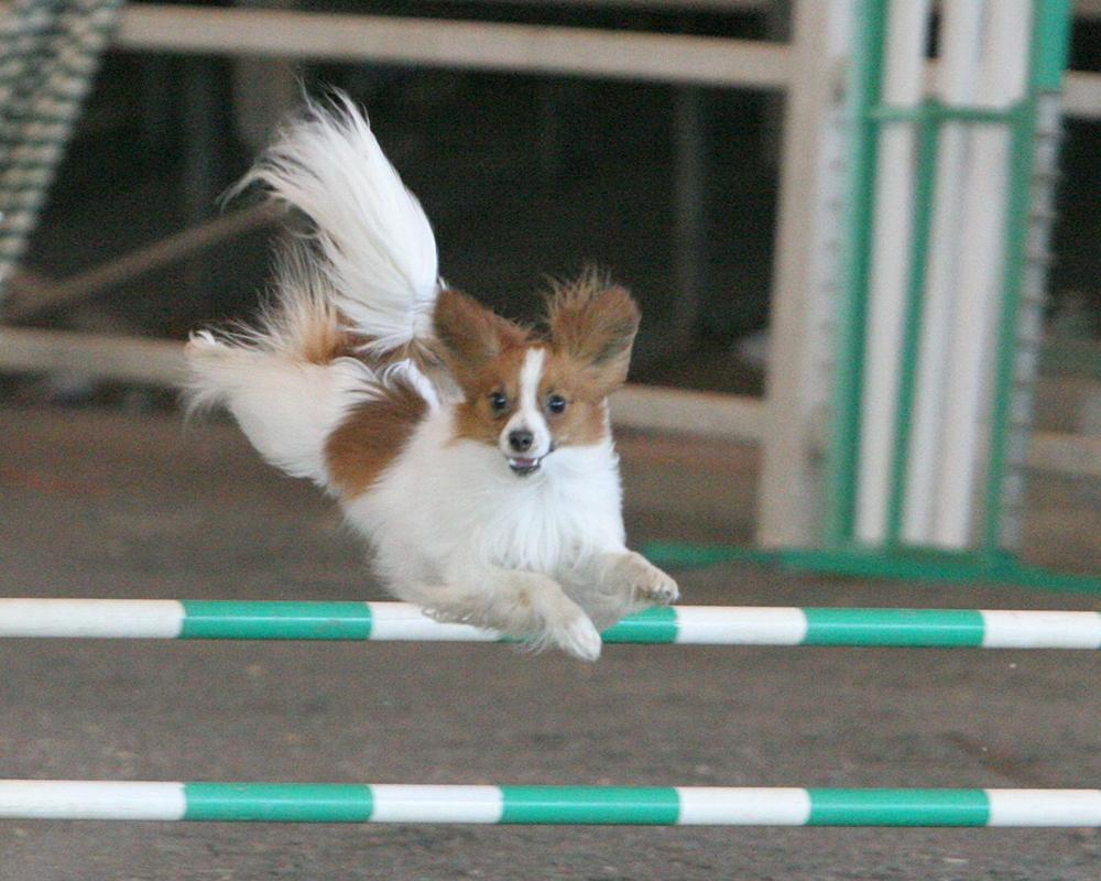 Ustrezno šolanje psa - product image