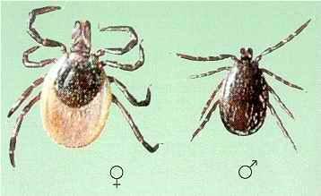 Zunanji zajedalci - product image