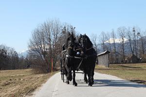 Prevozi s kočijo - product image