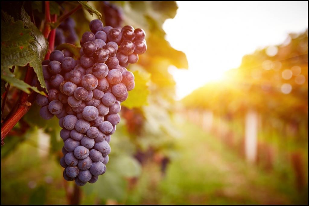 Izleti za vinogradnike - tujina - product image