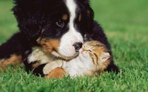 Brezplačno svetovanje pred prihodom novega ljubljenčka - product image