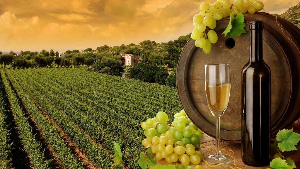 Izleti za vinogradnike - product image