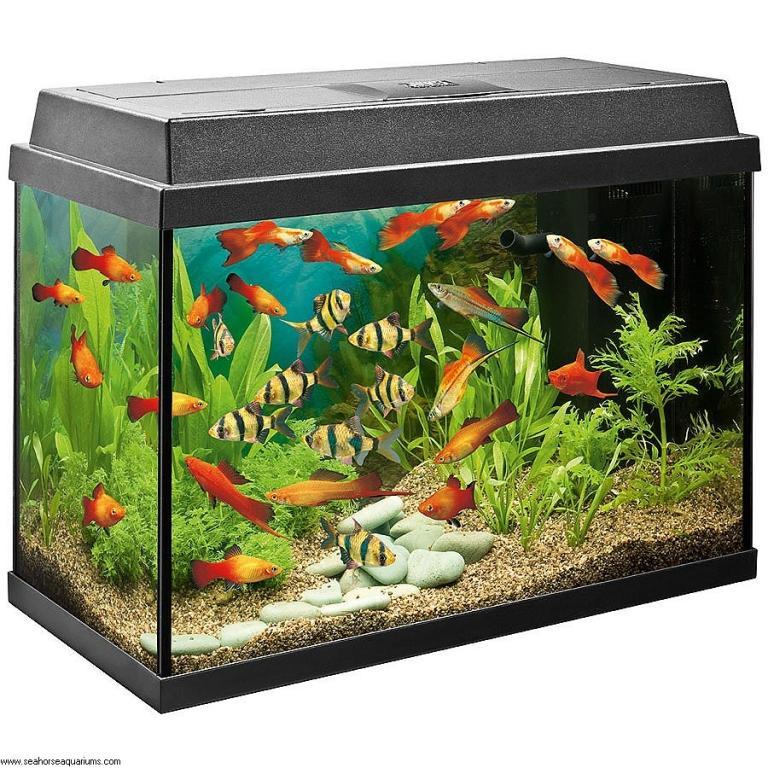 Ribe in plezalci - product image