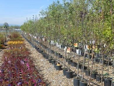 Ponudba rastlin - product image