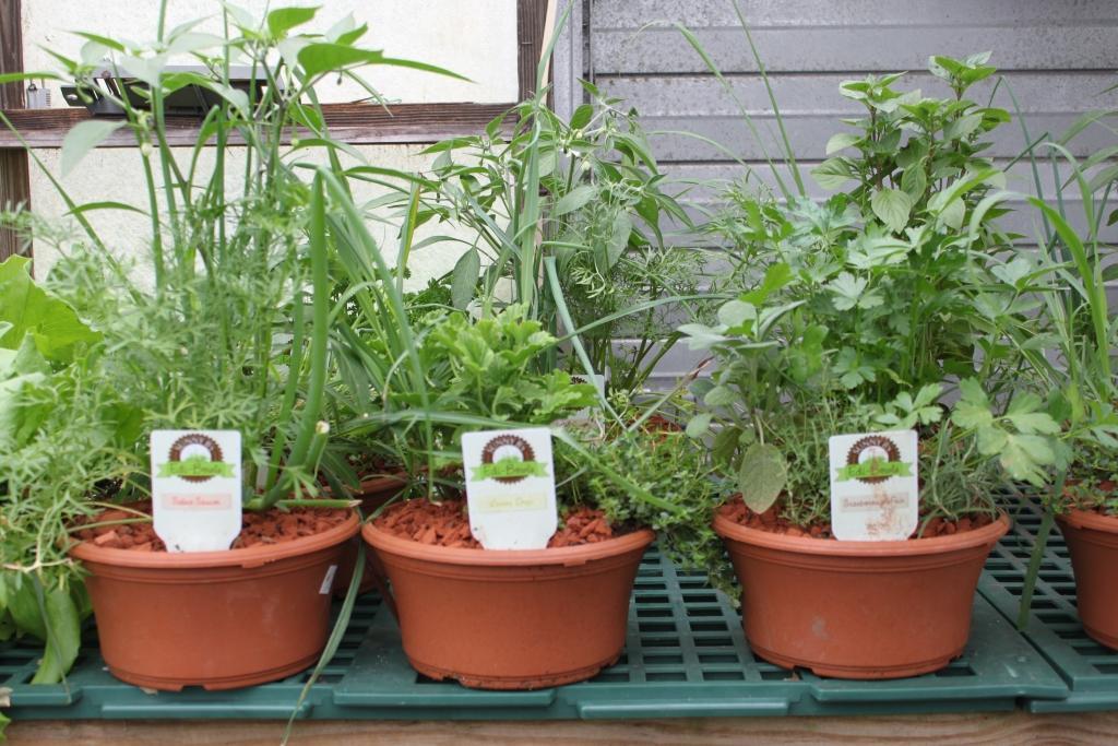 Ponudba cvetlic, sadik zelenjave in zelišč - product image